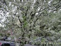 drzewokrzew_002