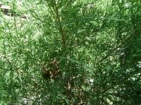 drzewokrzew_012