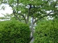 drzewokrzew_028