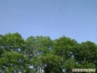 drzewokrzew_031