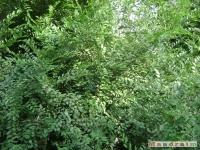 drzewokrzew_032