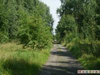 drzewokrzew_036