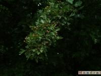 drzewokrzew_038