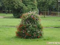 drzewokrzew_040