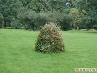 drzewokrzew_041