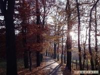 drzewokrzew_044