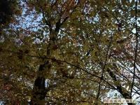 drzewokrzew_046