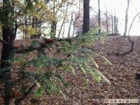 drzewokrzew_047
