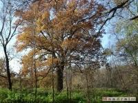 drzewokrzew_049