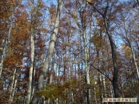 drzewokrzew_051
