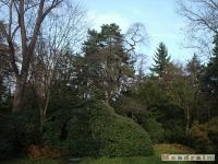 drzewokrzew_053