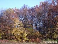 drzewokrzew_056
