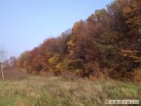 drzewokrzew_057