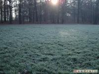drzewokrzew_058