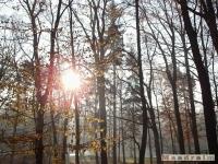 drzewokrzew_059