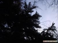 drzewokrzew_064