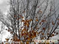 drzewokrzew_069