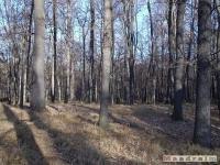 drzewokrzew_072