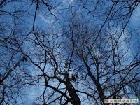 drzewokrzew_079
