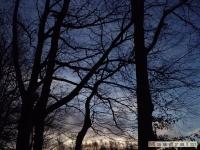 drzewokrzew_080