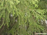 drzewokrzew_081