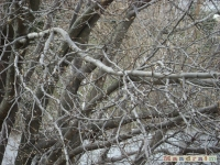 drzewokrzew_082