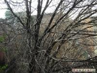 drzewokrzew_084
