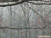 drzewokrzew_092