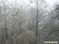 drzewokrzew_093
