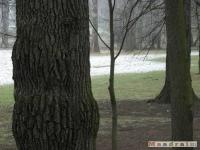 drzewokrzew_097