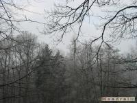 drzewokrzew_099