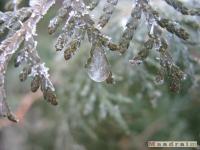 drzewokrzew_100