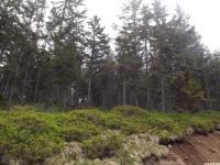 drzewokrzew_1000