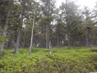 drzewokrzew_1001
