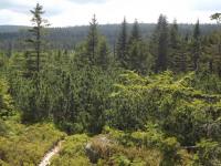 drzewokrzew_1003