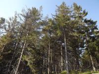 drzewokrzew_1013