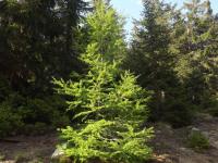 drzewokrzew_1015