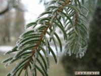 drzewokrzew_106