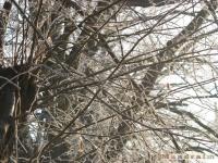 drzewokrzew_107