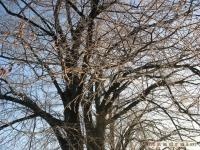 drzewokrzew_108