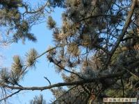 drzewokrzew_113