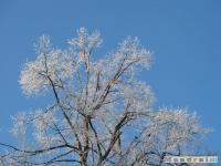 drzewokrzew_115