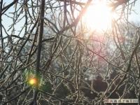 drzewokrzew_116