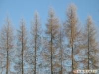 drzewokrzew_117
