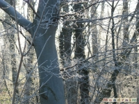 drzewokrzew_121