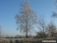 drzewokrzew_122