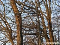 drzewokrzew_136