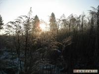 drzewokrzew_138