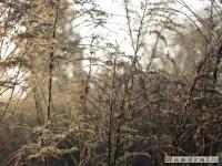 drzewokrzew_139