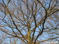 drzewokrzew_146